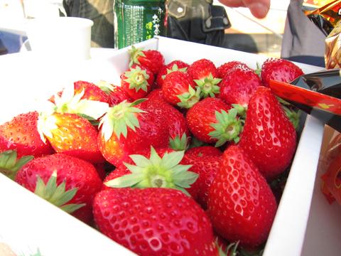KIKIさんちのイチゴ